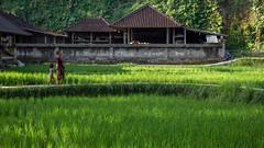 27082013-IMG_6766 (christophecavelli) Tags: landscape nature bali travel