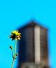 (Michael Ferranti Photography) Tags: nyc flowers art naked penis chelsea homeless piercing arabic sunflower statueofliberty nudity nycstreet frankgehry princealbert scrotum