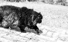 Monferrato, Italy (meduri.giuseppe) Tags: italy farmhouse cat countryside persian italian wine vine piemonte grapes doc campaign turin muscat grapevine barbera asti monferrato docg moscato dolcetto mombaruzzo