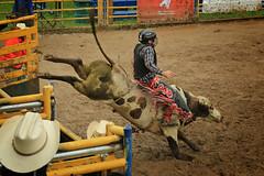 CalgaryPoliceRodeo2015-BullRiding-511 (calgarypolicerodeophotos) Tags: horse calgary race bareback sheep barrel police bull racing poker rodeo calf bullriding chute mutton saddle bronc steerwrestling barrelracing saddlebronc cpra chutedogging