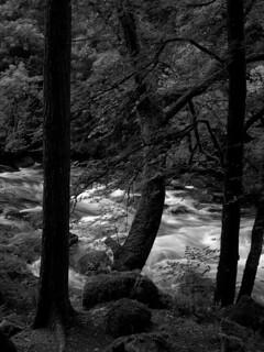 Trees and Afon Llugwy