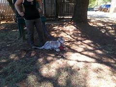 20150919_115746 (mjfmjfmjf) Tags: oregon zoo tigercub 2015 greatcatsworldpark