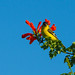 yellow-bird-Sept-2015-137