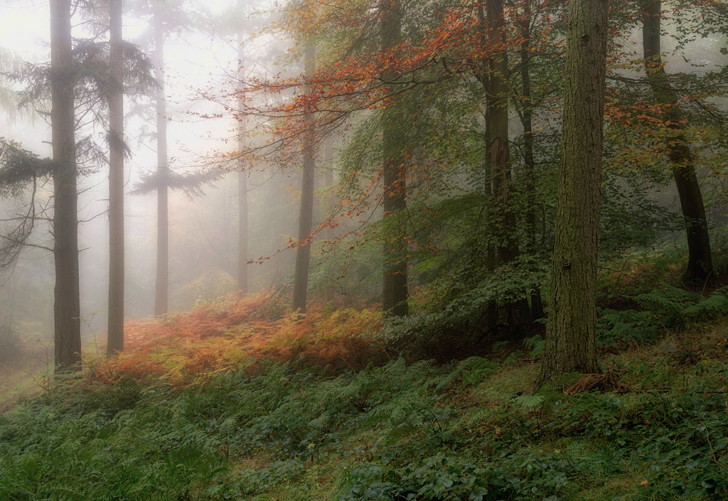 misty woods how to get to light