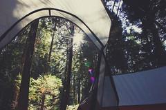 (naaandrea) Tags: camping woods tent lensflare kingscanyon kingscanyonnationalpark