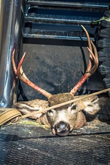 Today marked the opening of deer hunting season.