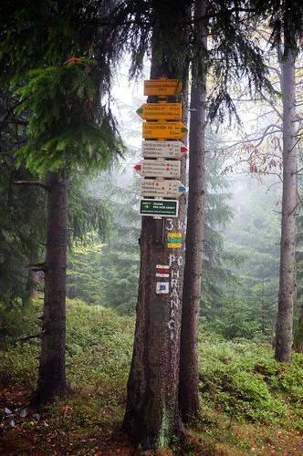 Borówkowa: drogowskazy / trail arrows