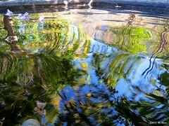 Pool, Reflection, Wave (Foto Mesut) Tags: reflection pool wave yansma havuz dalga