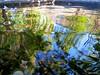 Pool, Reflection, Wave (Foto Mesut) Tags: reflection pool wave yansıma havuz dalga