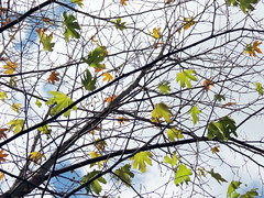 . . . (Ebrahim Baraz) Tags: autumn khorasan پاییز torghabeh طرقبه dehbar دهبار براز ebrahimbaraz
