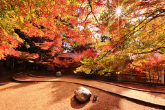 Maples (Singer ) Tags: canon6d canonef1635mmf28lusm   160sec f18 iso320 16mm   sunburst sunlight warm      maple redgreen autumn tree  angle atmosphere  stone      stretch     composition       light shadow    taiwan   singer186 singer  canon zen
