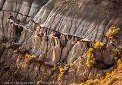 Badlands Slices, Theodore Roosevelt National Park, North Dakota (edleckert) Tags: plant color tree horizontal photography nationalpark day unitedstates northdakota northamerica theodorerooseveltnationalpark deciduoustree midwestusa