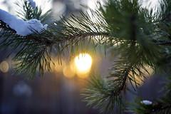 Winter Sunset (arthur_streltsov) Tags: ngc winterbeauty colorsinourworld coloursinourworld sonyflickraward trophyofexcellence