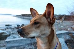 August in December (liziza22) Tags: sunset dogs vermont waterfront lakechamplain burlingtonvt