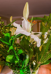 christmas lilies (pbo31) Tags: california christmas flowers winter white color green night dark season flora nikon holidays december cut lilies bayarea bunch vase eastbay livermore alamedacounty 2015 boury pbo31 d810
