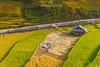 K0931.0913.Bản Phùng.Hoàng Su Phì.Hà Giang (hoanglongphoto) Tags: asia asian vietnam northvietnam northeastvietnam landscape scenery vietnamlandscape vietnamscenry vietnamscene terraces terracedfields terracedfieldsinvietnam hill hillside plant harvest tophill canon canoneos1dx canonef70200mmf28lisiiusmlens outdoor đôngbắc hoàngsuphì hàgiang phongcảnh ruộngbậcthang lúachín mùagặt mùagặthoàngsuphì mùalúachínhoàngsuphì ngọnđồi đồicây thựcvật ruộngbậcthanghoàngsuphì bảnphùng people house người ngườigặtlúa ngôinhà sunlight nắng sunny morning buổisáng sunnymorning nắngsớm landscapewithpeople phongcảnhcóngười