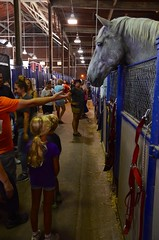 Huge Horse At The State Fair (Joe Shlabotnik) Tags: september2016 syracuse violet newyorkstatefair everett statefair 2016 afsdxvrzoomnikkor18105mmf3556ged