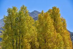 Fall Colors - Arrowhead (www.karltonhuberphotography.com) Tags: 2016 abstract arrowhead aspenleaves aspentrees autumn bishopcreekcanyon bluesky bright california closeup easternsierra fallcolors freshair horizontalimage inspiring invigorating isolation karltonhuber landscape landscapephotography mountainpeak naturalworld nature outdoors patterns vivid wildplaces yellow