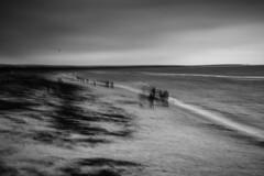 windy (hansekiki ) Tags: dars ostsee prerow beach strand icm intentionalcameramovement multipleexposure mehrfachbelichtung sw canon 5dmarkiii balticsea