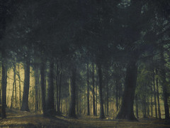 forest x (Marjatta Cajn) Tags: forest wood trees light spring