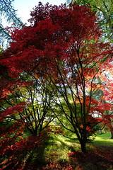 Autumn Walks (flamed) Tags: autumn uk seasons nature landscape red crimson