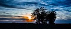 Sunset Field (wolfi8723) Tags: field sunset sunshine clouds silouette outdoor outside tree nature natur bume sun