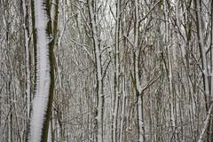 ckuchem-1649 (christine_kuchem) Tags: baumrinde buche bume eiche eis frost hainbuche natur pfad pflanzen ruhe samen spuren stille struktur wald weg wildpflanzen winter einsam kalt schnee ste
