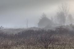 granja brumosa (Christian Collins) Tags: fog foggy canon t2i efs24mm granja brumosa brumoso farm barn fall morning roadside barny shrubbery