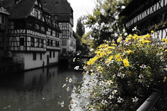 Flores (h.m1505) Tags: flores alsacia estrasburgo francia europa agua rio corriente de arquitectura paisaje