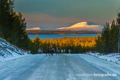 DSC03113 (norwegen-fotografie.de) Tags: norw norwegen norway norge femunden femundsmarka villmark hedmark see wildnis wald landschaft