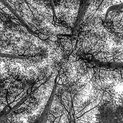 DSC_1266 (Andrew J Horrocks) Tags: formby pinewoods freshfield liverpool trees