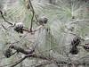 DSCN0330 (apacheizabel) Tags: lago pássaros árvores céu pinhas tronco espelho dágua queroquero rolinhas banco no bosque família de galinhas passeio parque centro aeroespacial da aeronáutica cta são josé dos campos sp