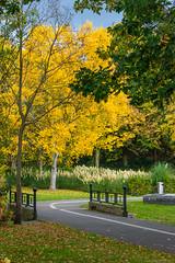 SSS_6617.jpg (S.S82) Tags: tudorgrangepark autumn england winter cloudy foliage falls randomclicks park westmidlands solihull uk ss82 color murky overcast statepark unitedkingdom