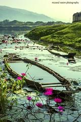 Niladri, Tekerghat (Mizanul Nasim) Tags: niladri sylhet tekerghat sunamganj bangladesh landscape waterscape boats water waterlilies flower hills morning mizanul nasim serene serenity tranquil tranquility