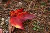 _DSC2575 (BrettGV) Tags: autumn sonnart18135