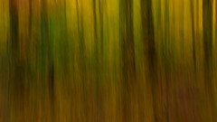Fall Abstract (Somuchtwosay) Tags: abstract pan fall autumn trees impressionism handheld sureal plants nature art forest outdoor