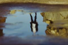Falling (darkWhiteYeti) Tags: water puddle reflection sillhouette upsidedown upside down