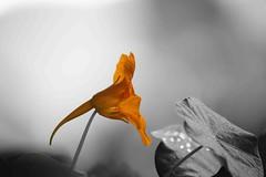 Some Colours in a Grey and stressing Day (Rolf-Schweizer) Tags: schweiz swiss switzerland stgallertagblatt suisse svizzera schweizerischerbauernverband sky fotografie flickr farben flower rolfschweizer rolfschweizerfotografie rolfschweizerphotography thechurchofjesuschristoflatterdaysaints toggenburg kirchejesuchristiderheiligenderletztentage keystone kunst bauernverband bauer naturephotography nature natur neckertal morning degersheim day heart hoffeld heaven harmony himmel hoffnung hope