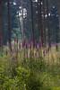 ckuchem-3559 (christine_kuchem) Tags: abholzung baum bienenweide blumen bäume fingerhut holzwirtschaft laubwald lichtung pflanzen spontanvegetation vegetation wald waldlichtung wildblumen wildpflanze wild
