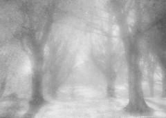 a time to dream (Hal Halli) Tags: november autumn fall ethereal fog wallart trees park