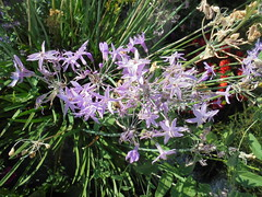 327 (en-ri) Tags: fiorellini lilla verde sony sonysti