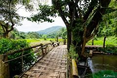 Puente de Bambu (M.Pellitero) Tags: rural verde arrozal hilltribe poblado tribu