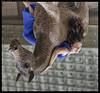 H51-B0017646 copy (mingthein) Tags: thein onn ming photohorologer mingtheincom availablelight gravitation is relative project pole dance czech republic street prague anastacia akentyeva hasselblad h5d50c medium format 645 h5d hc 22100 100f22