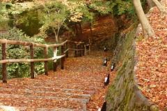 DSC02771 (MrSUIZOU) Tags: 京都 紅葉 北野天満宮 平野神社 十月桜
