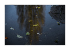 IMG_7979dr (aka polah2006) Tags: reflection leaves colour color abstract leoniepolah fall