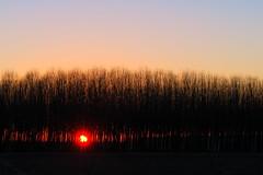 A new day! (flubatti) Tags: sunrise sun sunnyday trees landscape lombardy