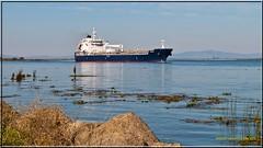 Louis P _2530  B  LR (bradleybennett) Tags: ship shipping cargo tanker tank river delta boat port channel steam large crew crane bay ocean dock pier blue red water line bulkcarrier louis p