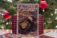 Christmas gift? (Lotterhand) Tags: search new englands pit vipers mark lotterhand timber rattlesnake copperhead sara horwitz hognose snakes christmas gift tree reptiles box turtles herpetology black racer massachusetts hampshire herping connecticut vermont rhode island crotalus snake york cottonmouth eastern diamondback