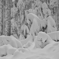 Winters Buriel, Mt. Hood (Scott Withers Photography) Tags: cathedralridge mthood oregon sonya7rii sonyfe2470mmf28gm