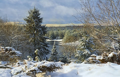 Winter Has Arrived (Lindaw9) Tags: snow treeline spruce poplar sky december shanty bay northern ontario